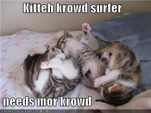 caption captioned cat Cats crowd kitten more needs surfing - 3843592192