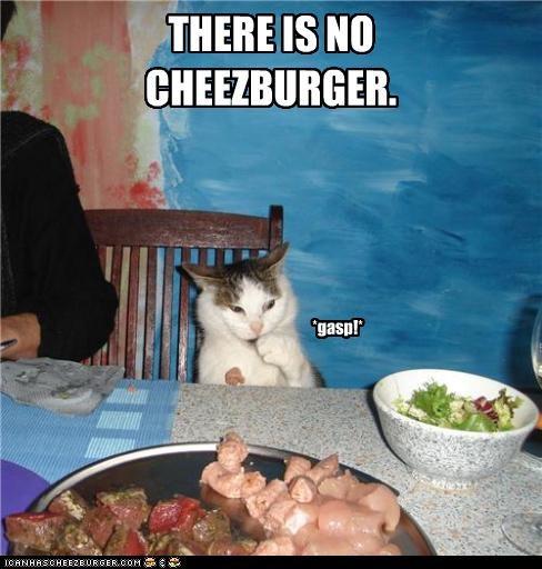 Cheezburger Image 3844046080