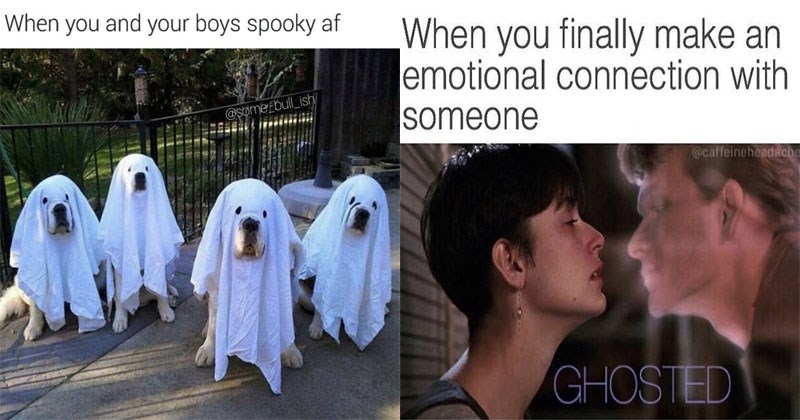 Funny and random memes about dogs, cats, animals, halloween, halloween costumes, dating, relationships, school, food, sex, tinder, online dating.