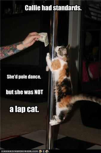 caption cat Hall of Fame lap cat money pole pole dance standards