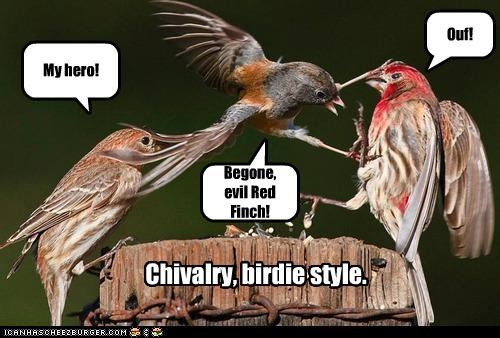 Chivalry, birdie style. Begone, evil Red Finch! My hero! Ouf!