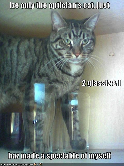 Cheezburger Image 3845871616