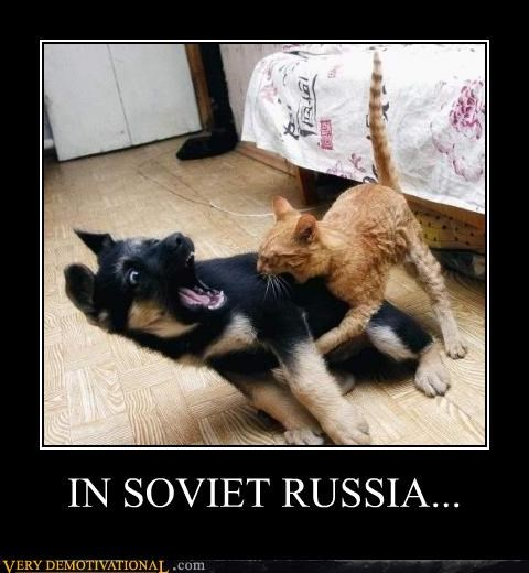 animals,biting,Cats,dogs,hilarious,Soviet Russia,Terrifying,yakov smirnoff