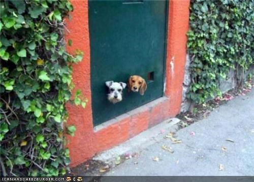 cute,dachshund,game,mixed breed,package,peekaboo,peeking,terrier