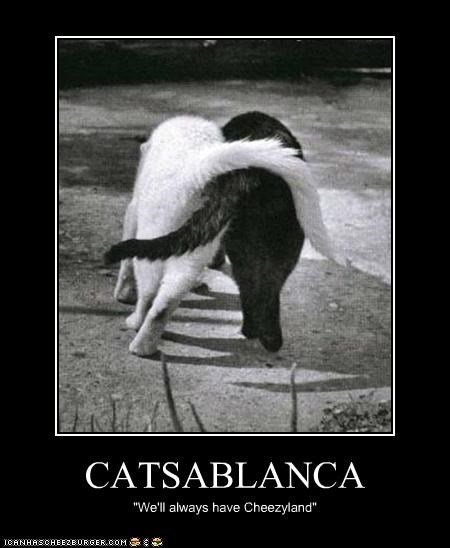 "CATSABLANCA ""We'll always have Cheezyland"""