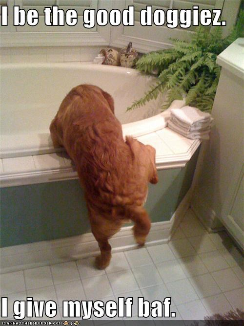 bath,good doggy,Hall of Fame,nice,self-motivation