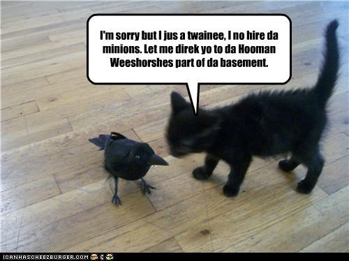 basement,basement cat,caption,captioned,cat,crow,human resources,kitten,minions,recommendation,sorry,trainee