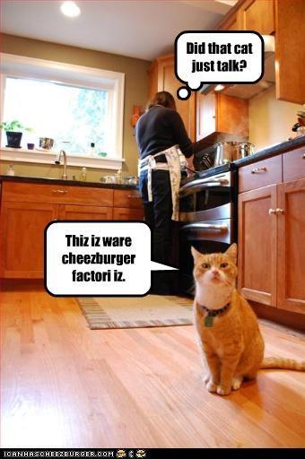 Cheezburger Image 3846999040