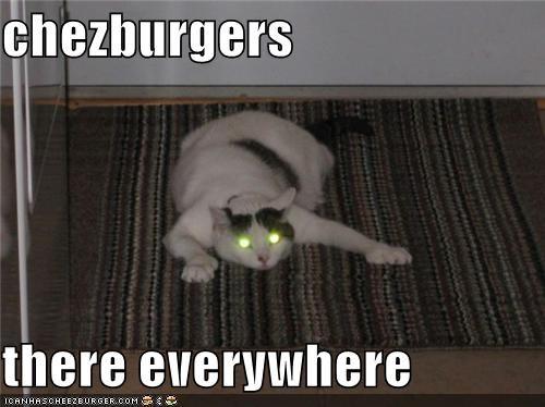 Cheezburger Image 3847086848