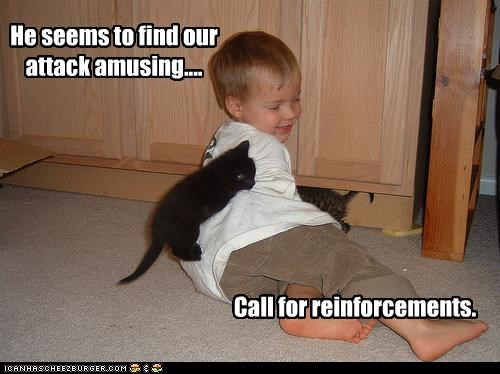 amusing attack call caption captioned cat dont-understand human kitten reinforcements toddler unfazed - 3847118592