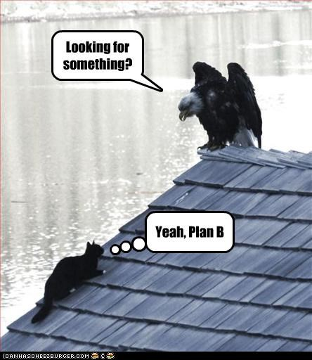 caption cat danger eagle plan b run - 3848072192