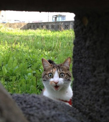 a list of very shocked cats