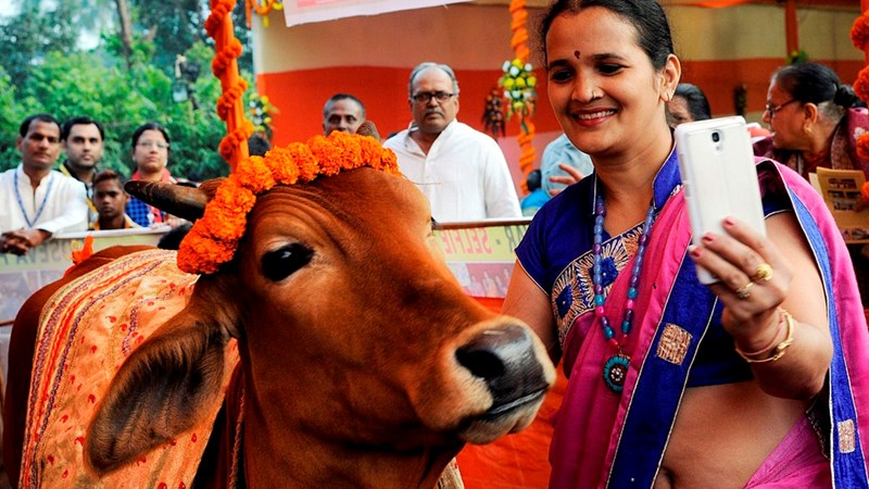 selfie with a cow campaign