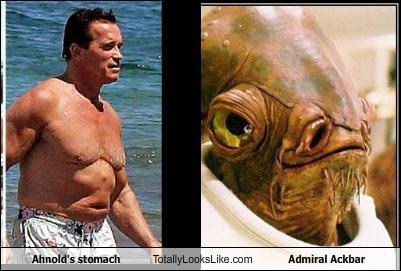 admiral ackbar Arnold Schwarzenegger stomach - 3849516288