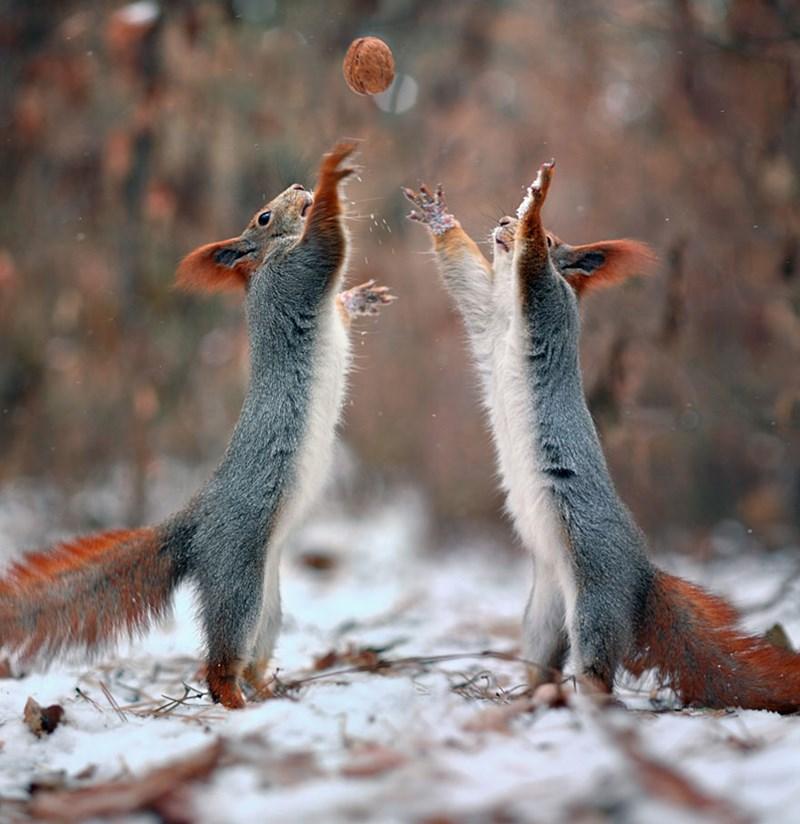 photos of squrriels