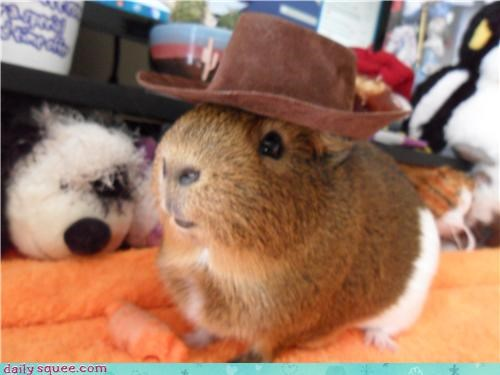 GPig guinea pig nerd jokes - 3850878976