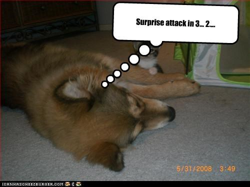 Cheezburger Image 3851005696