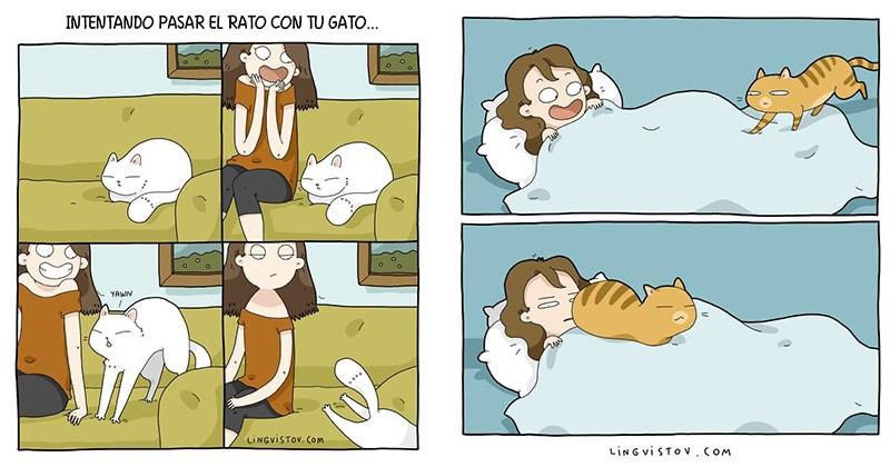 vivir gato lingvistov
