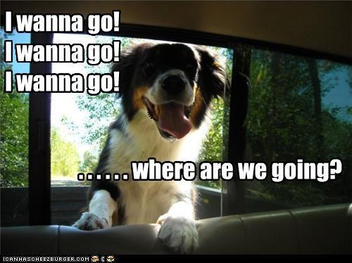 mixed breed mountain dog passenger riding truck wanna go - 3851522048