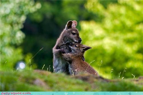 baby mama wallaby - 3851815936
