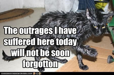 caption never forgotten outrages suffered wet cat - 3852532480