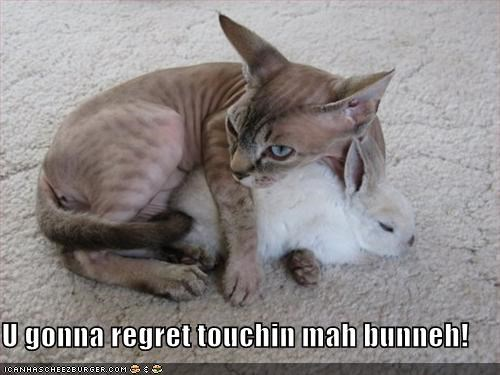 bunny,caption,cat,dont-touch,protective,regret
