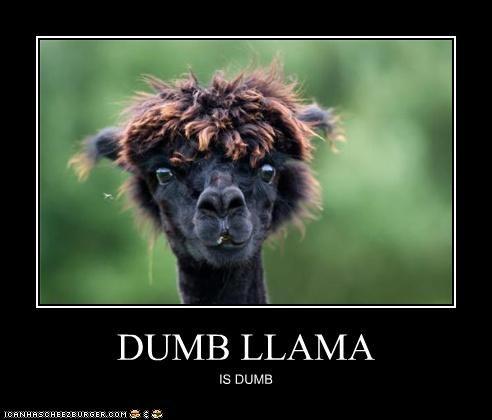 Dumb llama