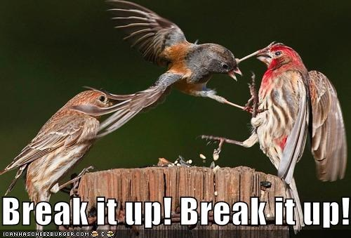birds,break it up,caption,fighting,robin
