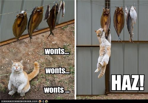 caption cat fish haz noms wants win - 3853482496