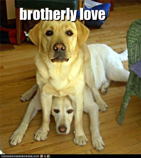 annoyed brothers cute Hall of Fame love silly squishing - 3853783808