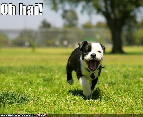 cute,Hall of Fame,mixed breed,oh hai,prancing,puppy,terrier,tongue