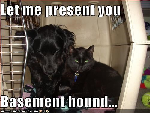 basement cat basement hound caption cat unveiling