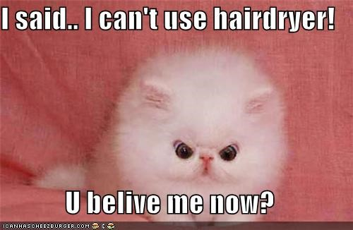 angry,caption,fuzzy,hairdryer,kitten