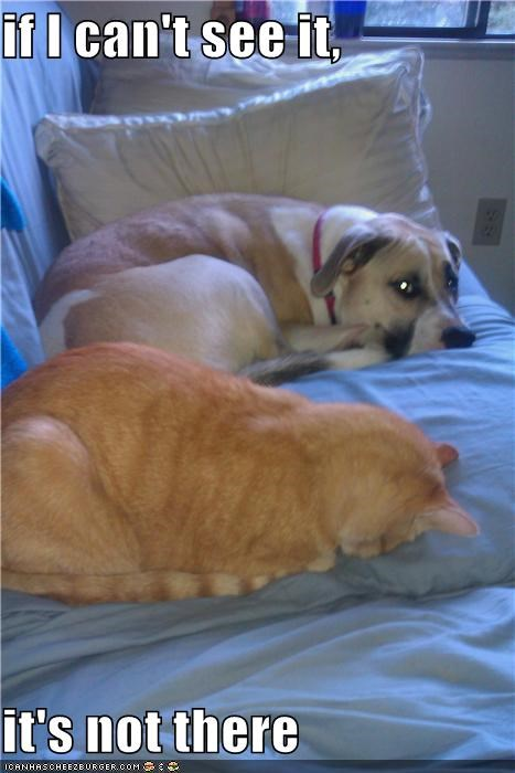 couch denial Hall of Fame hiding kitty mixed breed whatbreed - 3856987904