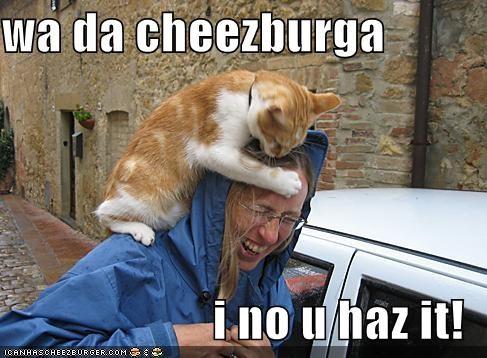 Cheezburger Image 3857263872