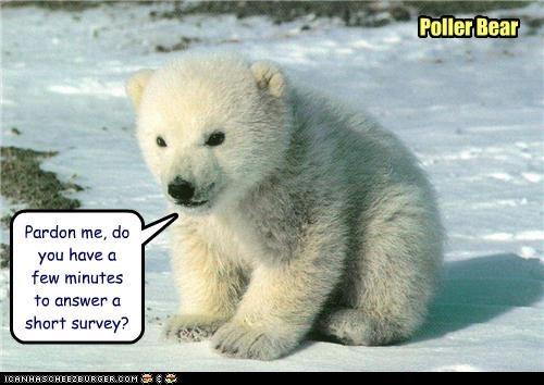 Pardon me, do you have a few minutes to answer a short survey? Poller Bear