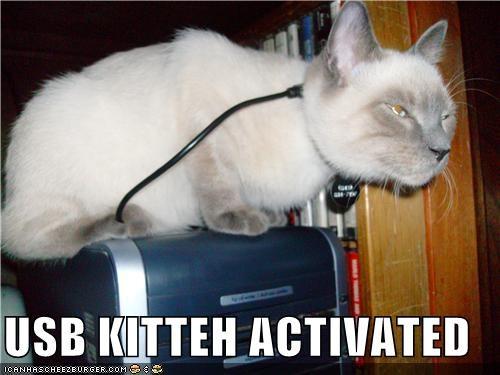 activation caption cat power USB - 3857841920
