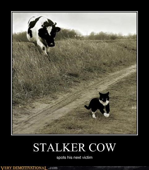 STALKER COW spots his next victim