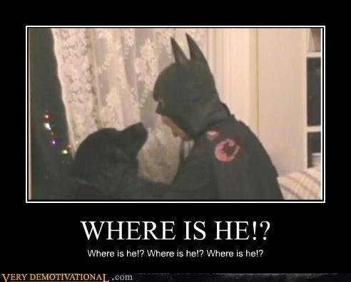costume batman dogs where is he