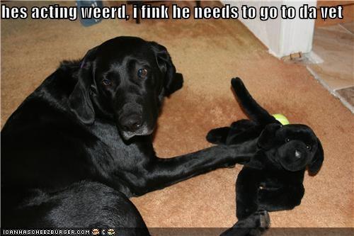 acting weird concern plush toy puppy vet - 3858347008