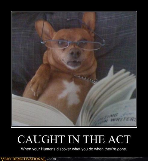 reading caught in the act dogs - 3858439168