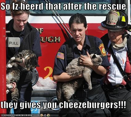 Cheezburger Image 3858615808