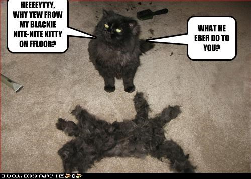 HEEEEYYYY,  WHY YEW FROW MY BLACKIE NITE-NITE KITTY ON FFLOOR?