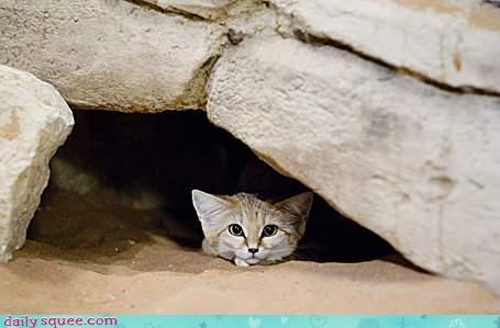 hide sand cat sandcat - 3860081920