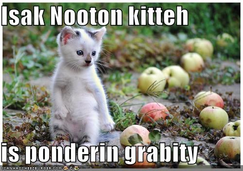 apples,caption,Gravity,isaac newton,kitty,pondering
