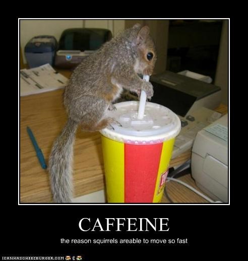caffeine caption fast movement squirrel - 3860374528