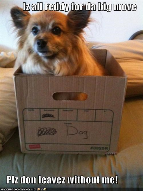 all ready,box,dont-leave-without-me,mixed breed,moving,packing,spaniel