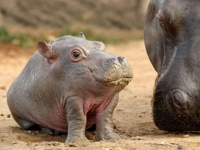 animals with no necks