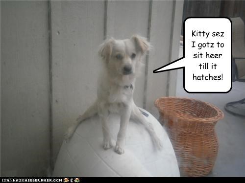 ball egg gullible hatching kitty lies trickery whatbreed