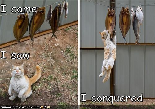 Cheezburger Image 3861748224